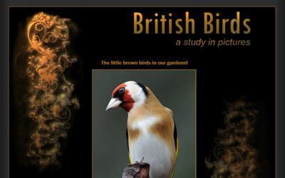 British Bird Study - website design from A Clear Web Worthing